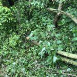 nettoyage des arbres tombés
